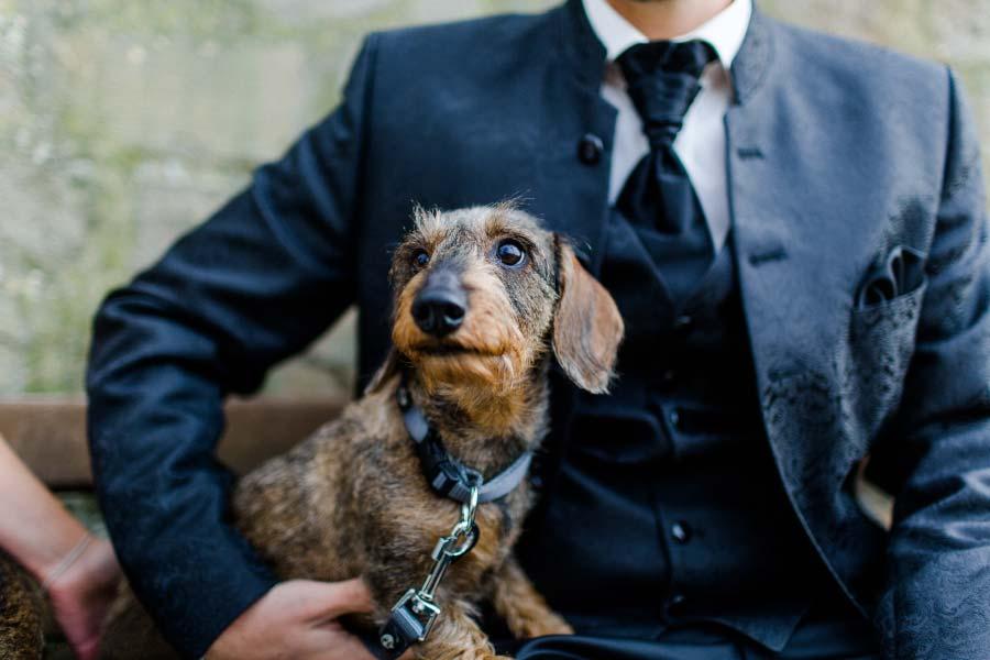 Bräutigam mit Hund