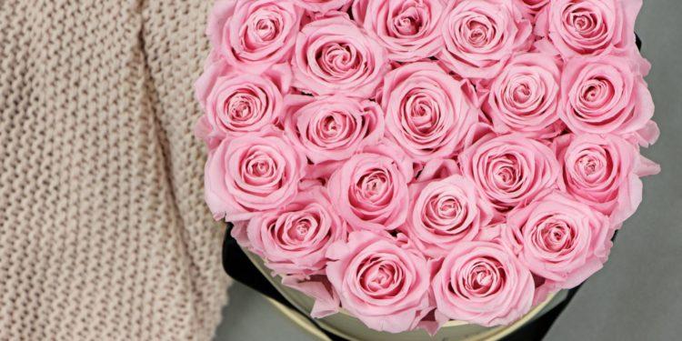 Erfahrungsbericht GRACE flowerbox: jahrelang haltbare Rosen