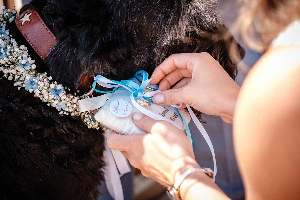 Hund bringt die Ringe während der Trauung