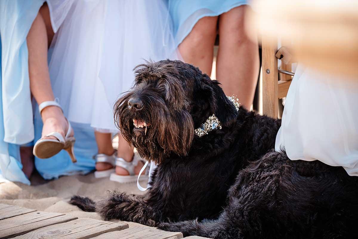 Hund bei der Hochzeit mit Blumen-Halsband