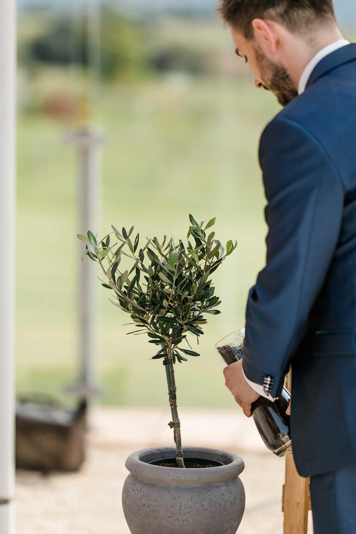 Bräutigam pflanzt einen Baum während der Hochzeit